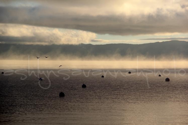 birds in fog-wm